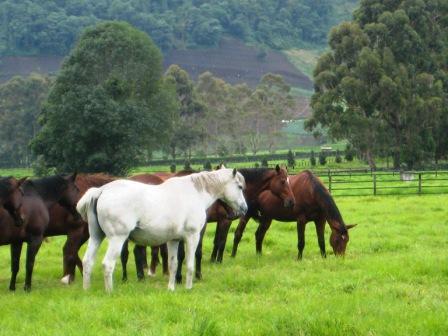 Volcan Horse Farm