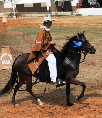 Peruvian horse competition in Parita