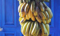 cropped-bananas-boquete.jpg