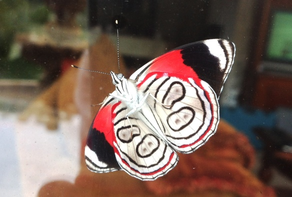 Moth at Brad and Jackies